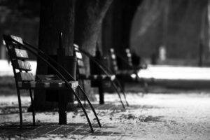 photography, Monochrome, Park, Trees, Bench, Depth of field, Winter