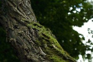 depth of field, Nature, Macro, Blurred, Dark, Photography, Bokeh, Trees, Leaves