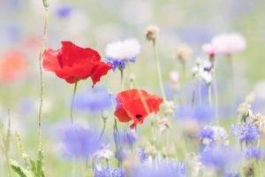 flowers, Nature, Plants