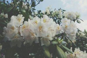 flowers, White, Summer