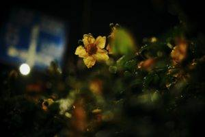 photography, Nature, Macro, Lights, Flowers, Leaves, Plants, Bokeh, Yellow flowers, Water drops