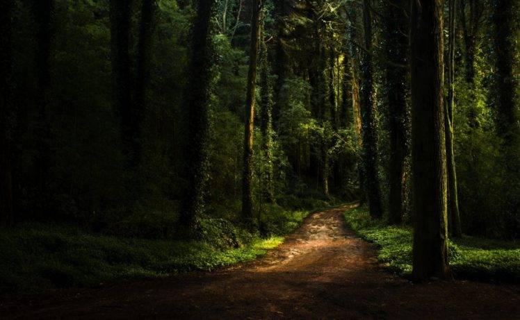 forest, Path, Dark, Moss, Plants, Grass, Sunlight HD Wallpaper Desktop Background