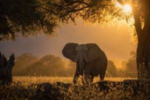 looking at viewer, Photography, Nature, Elephant, Trees, Sunset, Sunlight, Plants, Shadow, Bokeh