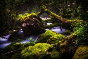 photography, Nature, Landscape, Water, Fall, Trees, Dead trees, Moss, Green, Plants, Rain