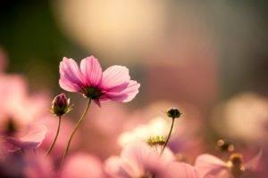 landscape, Pink flowers