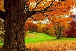 landscape, Fall, Grass