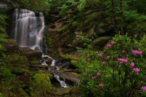 landscape, Plants, Waterfall, Forest, River, Water