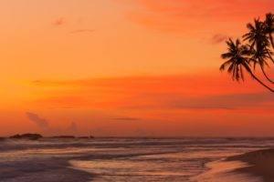 landscape, Sea, Palm trees, Tropical
