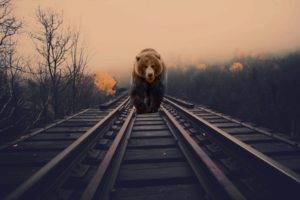 bears, Nature, Animals, Photo manipulation, Railway