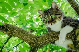 green eyes, Cat, Animals, Trees, Leaves
