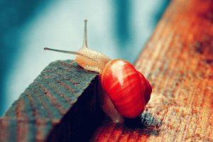macro, Snail
