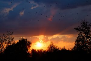 nature, Clouds, Sunset, Flying, Birds