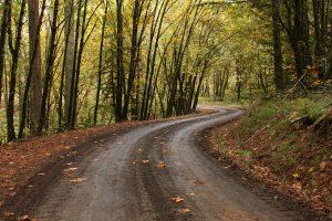 road, Forest, Fall, Path, Oak trees, Oregon