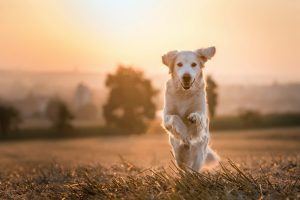 nature, Animals, Sunlight, Dog