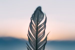feathers, Sunset, Depth of field
