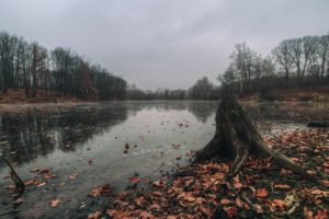 fall, Leaves, Stream, Dead trees, Water, Lake, Forest, Nature, Landscape