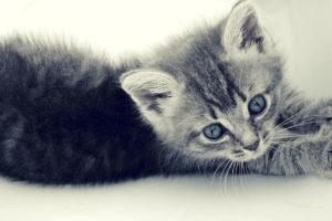 cat, Animals, Kittens