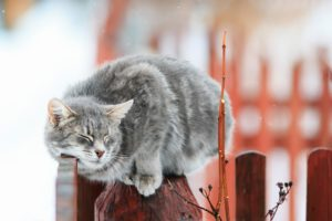 closed eyes, Cat, Animals, Fence, Closeup