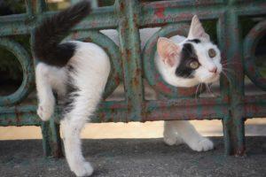 cat, Animals, City