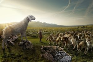 wolves, Flock, Sheep, Shepherd, Nature, Field, Sky, Rocks, Situation, Humor, Wolf, People, Men, Males, Landscapes, Sky, Mountains