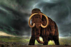 amazing, Mammoth