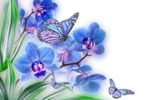 flowers, Butterflies, Butterfly, Soft, Bokeh, J