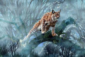 animals, Lynx