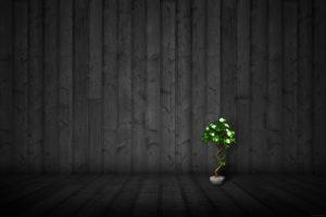 wood, Textures, Plants