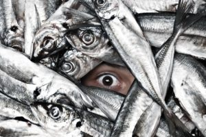 situation, Eyes, Humor, Funny, Fishes, Face, Pov