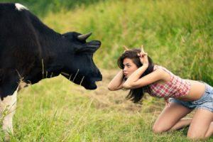 mujer, Vaca, Abstracto, Humor