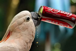 cockatoo, Parrot, Coca cola, Cola, Funny, Humor, Cute