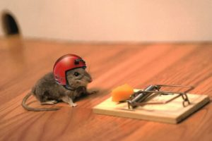 animals, Helmets, Mouse, Trap, Mice