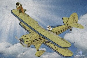 biplane, Airplane, Plane, Aircraft, Dog, Funny