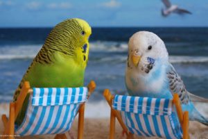 parakeet, Budgie, Parrot, Bird, Tropical,  23
