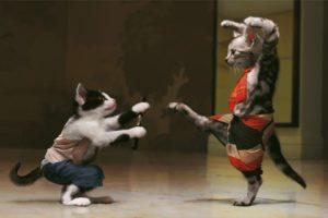 cats, Animals, Mimi, Kung, Fu
