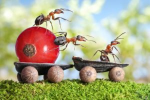 ants, Berry, Closeup, Currant, Animals, Wallpapers