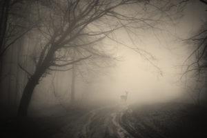 trees, Creepy, Landscape, Forest, Misty, Forest, Nature, Deer
