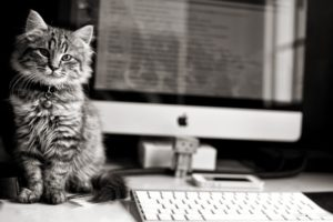 animals, Cats, Felines, Black, White, Tech, Computer, Keyboard, Screen, Reflection, Danbo, Amazon, Apple, Fur, Eyes, Stare, Whiskers