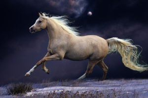 animals, Horses, Tail, Landscapes, Fields, Grass, Cg, Digital, Art, Manipulation, Sky, Clouds, Moon, Moonlight, Winter, Snow, Seasons