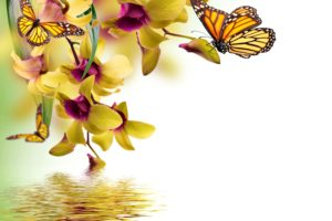 butterflies, Orchid, Painting, Art, Animals, Butterfly, Reflection