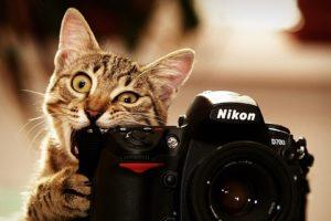 cats, Bite, Funny, Cameras, Nikon, Kittens, Photo, Camera, Biting