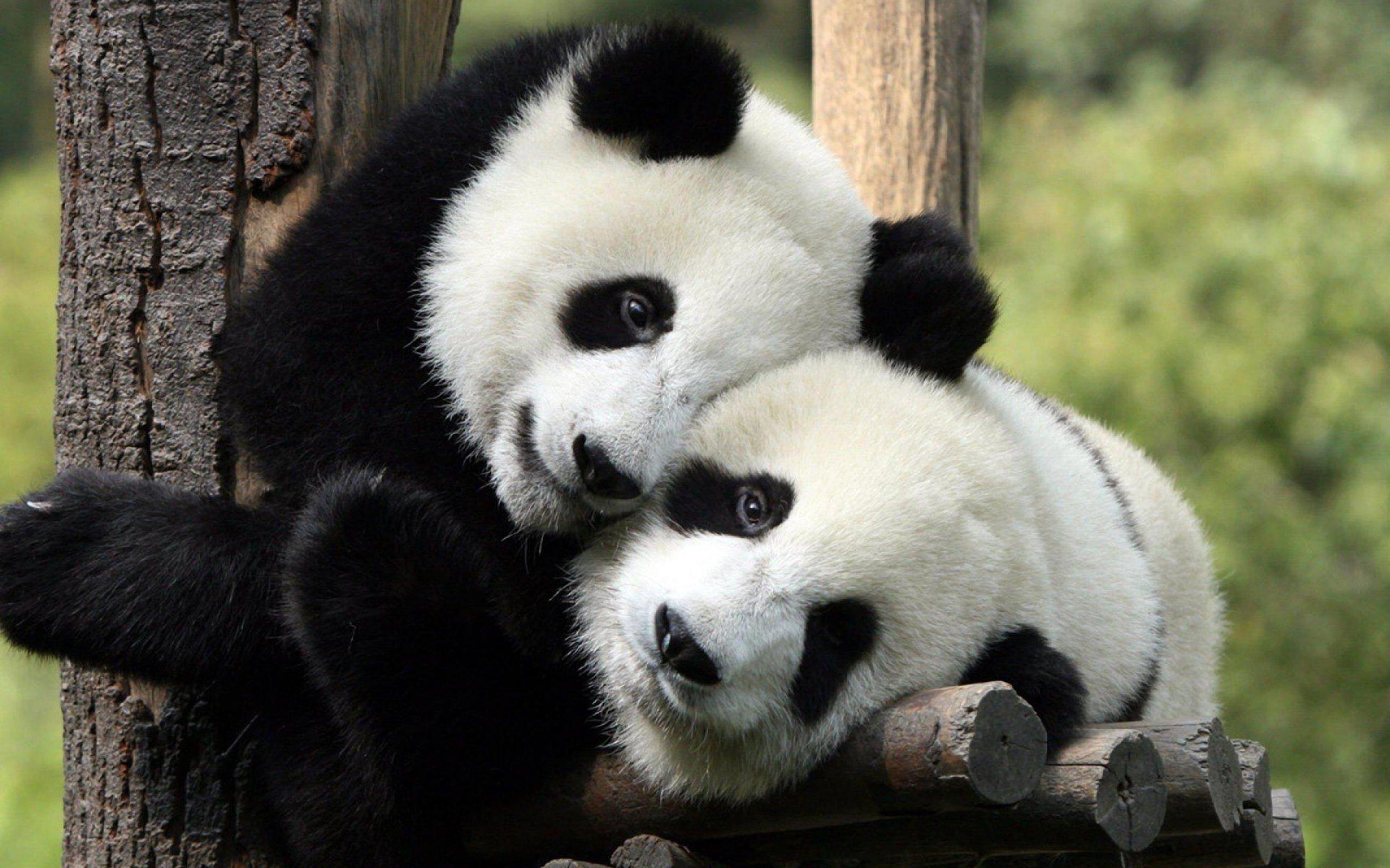 hug, Hugging, Couple, Love, Mood, People, Men, Women, Happy, Panda, Bear Wallpaper