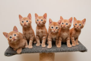 cats, Ginger, Color, Kittens, Animals