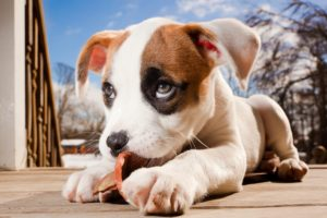 dogs, Puppy, Glance, Snout, Animals, Baby, Dog, Eyes