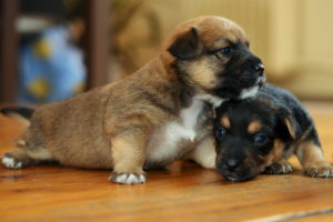 dogs, Puppy