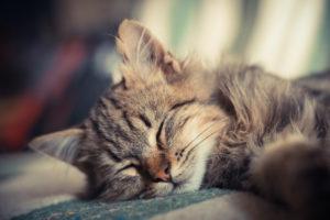 kitten, Sleeping, Cat, Small