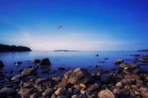 water, Landscapes, Nature, Coast, Birds, Rocks, Canada, Seagulls, Skyscapes, Sea