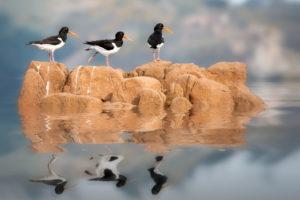 animals, Birds, Reflection, Water