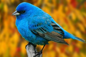 birds, Animals, Branches, Bluebirds