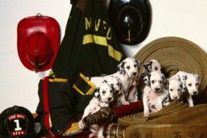 uniforms, Dogs, Friends, Puppies, Firefighter, Hats, Dalmatians